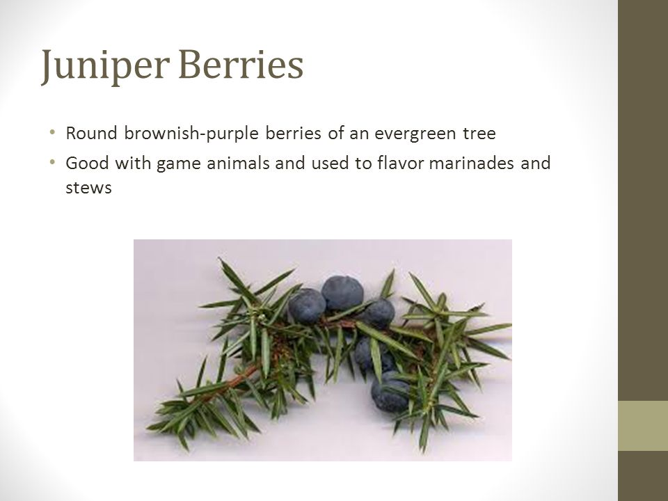 Juniper Berries Round brownish-purple berries of an evergreen tree Good with game animals and used to flavor marinades and stews