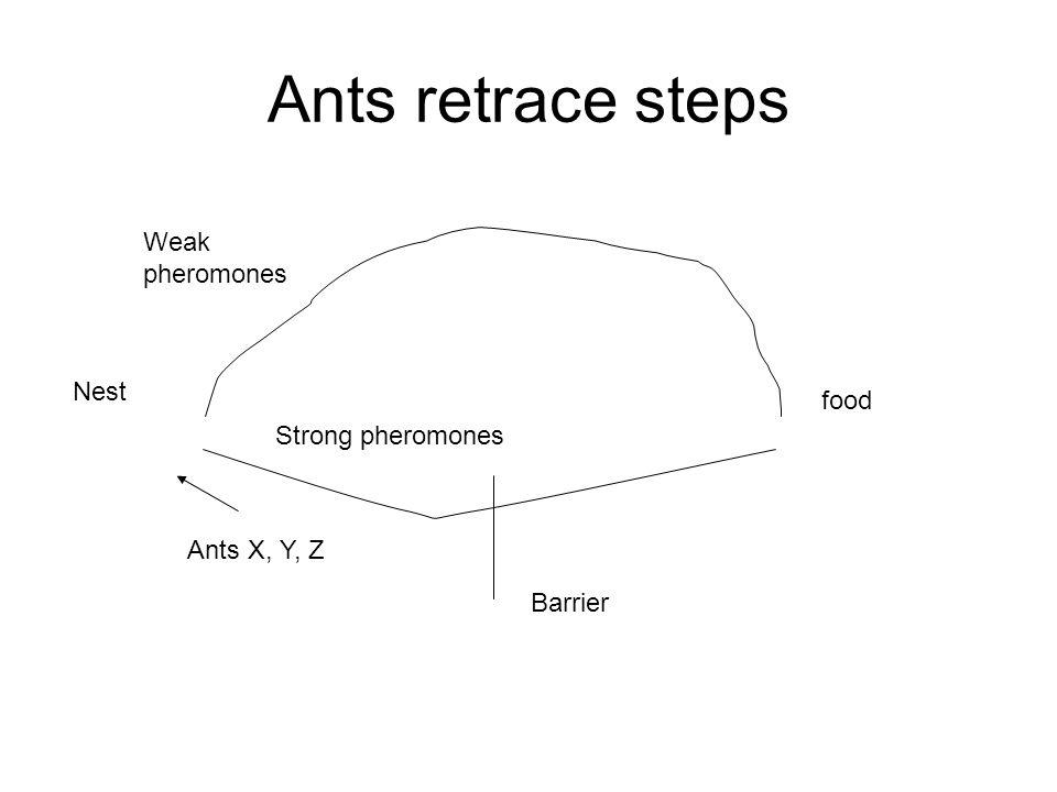 Ants retrace steps Nest food Weak pheromones Ants X, Y, Z Barrier Strong pheromones