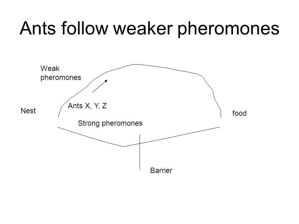 Ants follow weaker pheromones Nest food Weak pheromones Ants X, Y, Z Barrier Strong pheromones