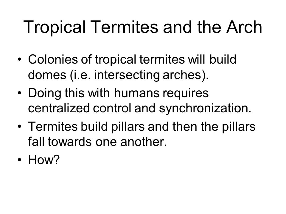 Tropical Termites and the Arch Colonies of tropical termites will build domes (i.e.