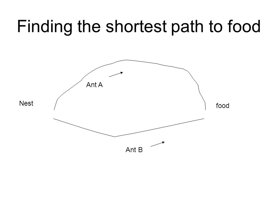 Finding the shortest path to food Nest food Ant A Ant B