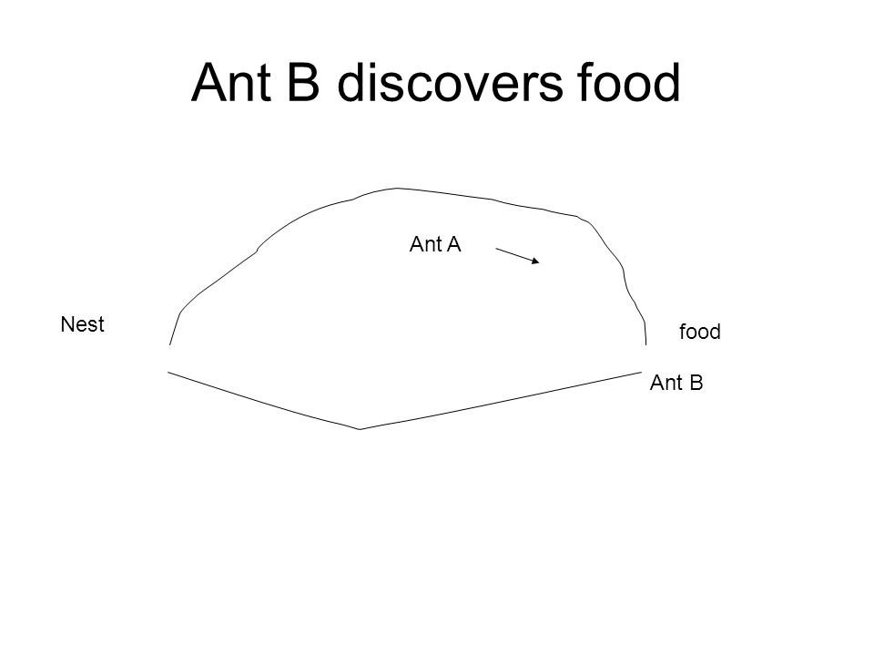 Ant B discovers food Nest food Ant A Ant B