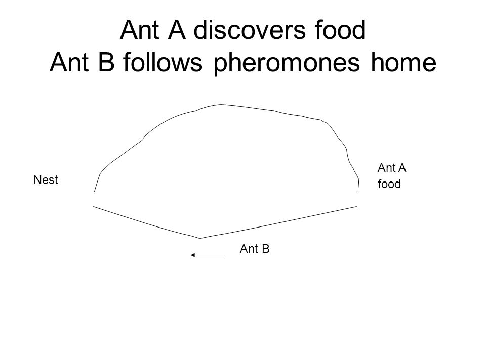 Ant A discovers food Ant B follows pheromones home Nest food Ant A Ant B