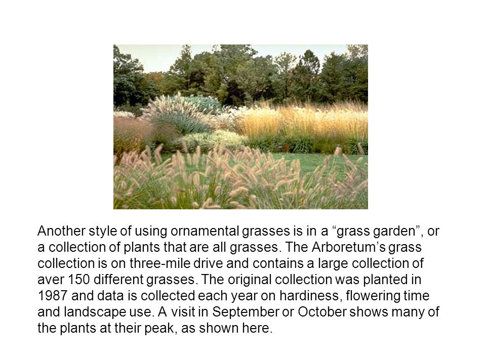 Another style of using ornamental grasses is in a grass garden , or a collection of plants that are all grasses.