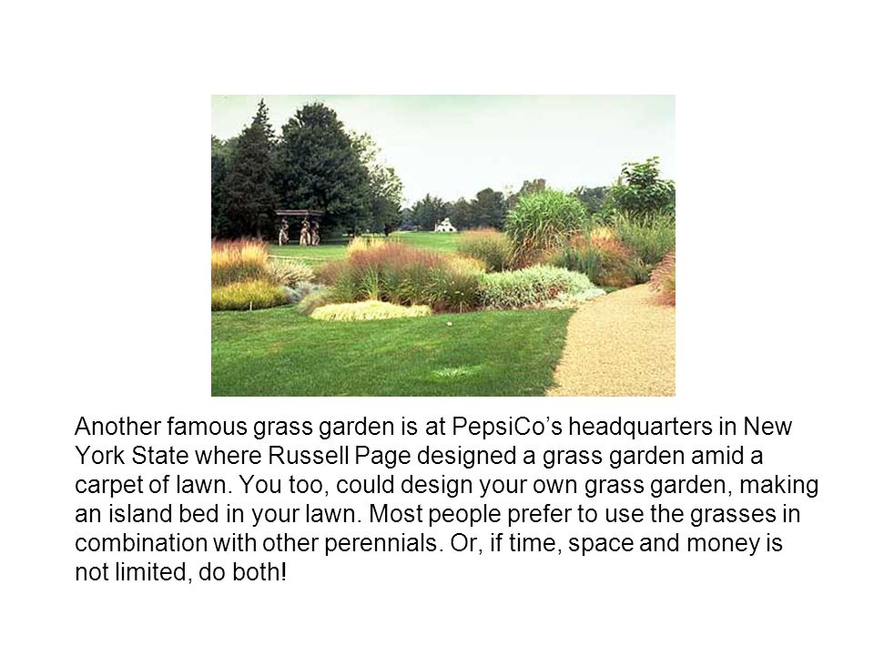 Another famous grass garden is at PepsiCo's headquarters in New York State where Russell Page designed a grass garden amid a carpet of lawn.