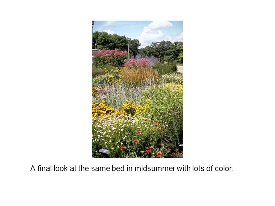 A final look at the same bed in midsummer with lots of color.