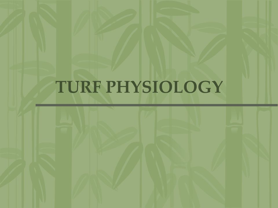 TURF PHYSIOLOGY