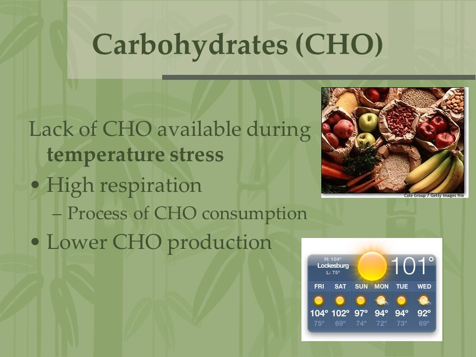 Carbohydrates (CHO) Lack of CHO available during temperature stress High respiration –Process of CHO consumption Lower CHO production