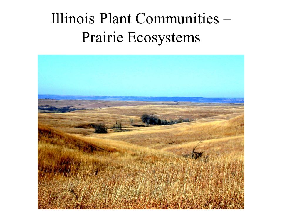 Illinois Plant Communities – Prairie Ecosystems