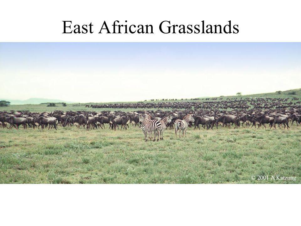 East African Grasslands