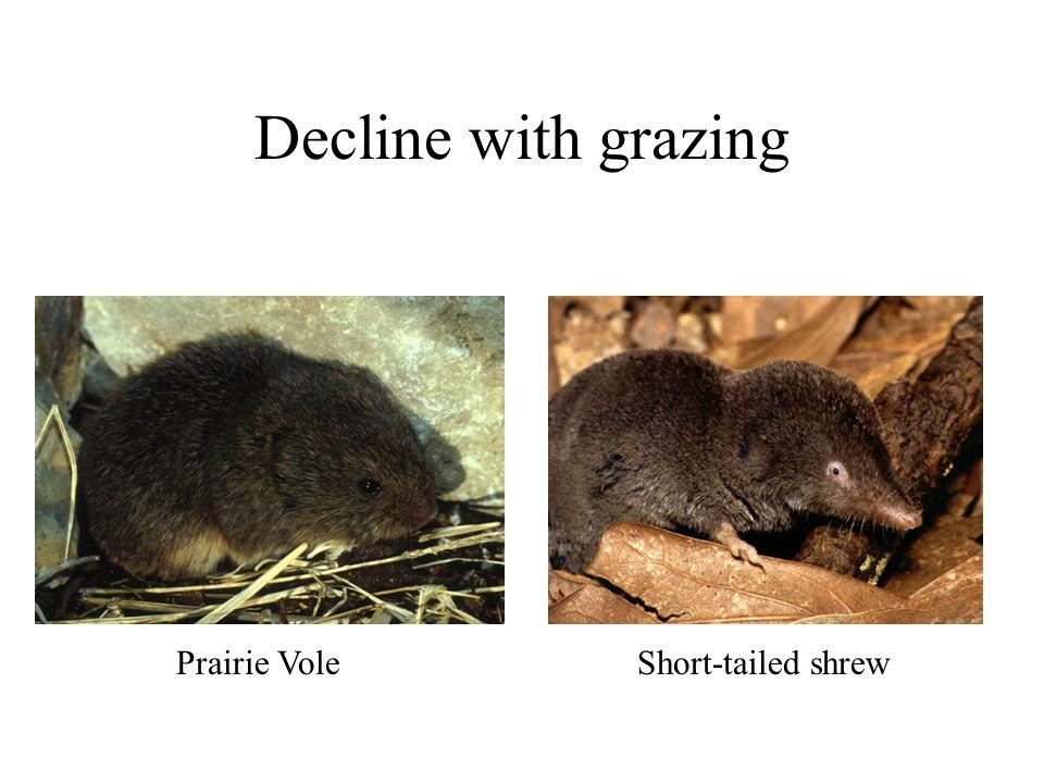 Decline with grazing Prairie Vole Short-tailed shrew