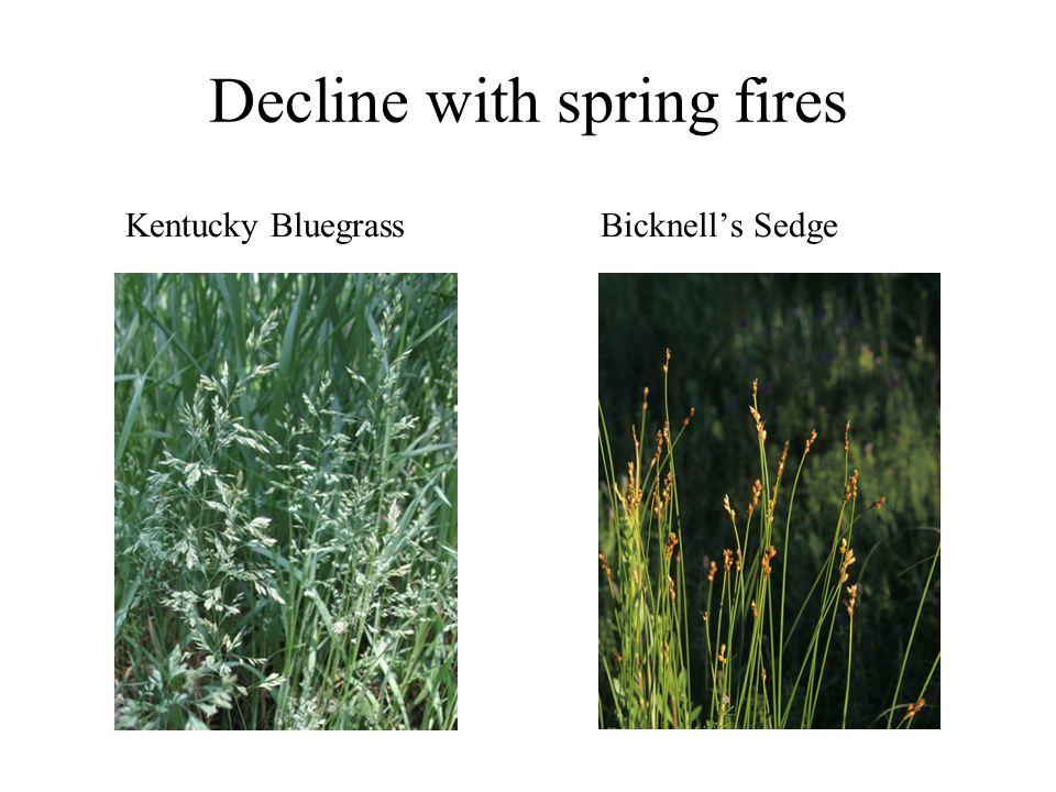 Decline with spring fires Kentucky BluegrassBicknell's Sedge