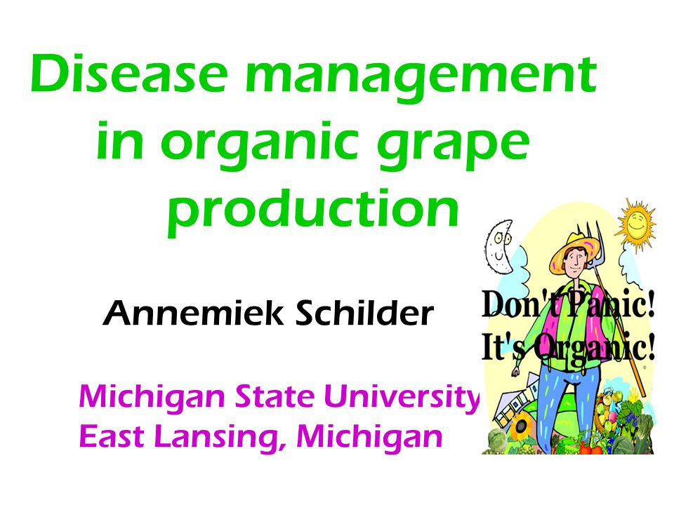 Disease management in organic grape production Annemiek Schilder Michigan State University East Lansing, Michigan