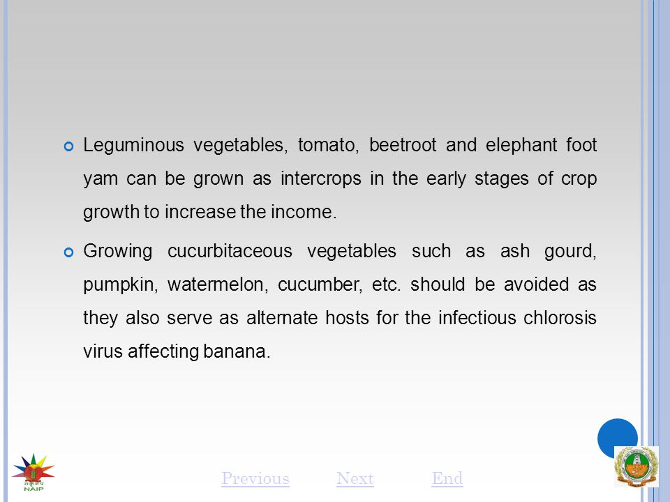 Leguminous vegetables, tomato, beetroot and elephant foot yam can be grown as intercrops in the early stages of crop growth to increase the income.