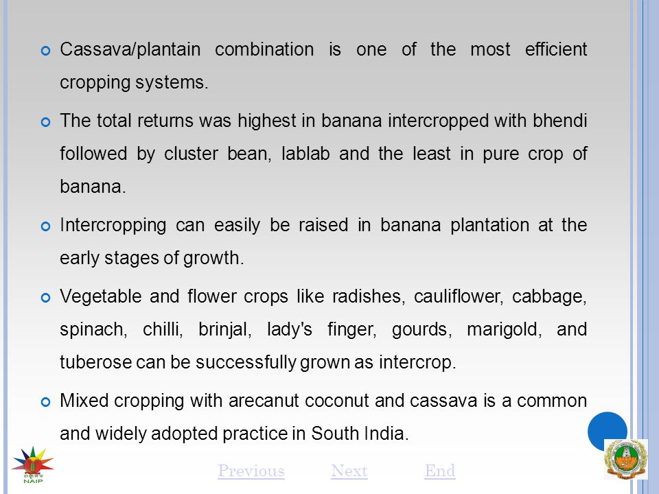 Cassava/plantain combination is one of the most efficient cropping systems. The total returns was highest in banana intercropped with bhendi followed
