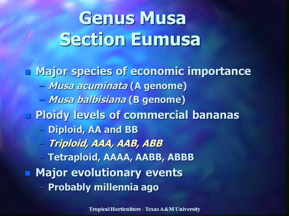Tropical Horticulture - Texas A&M University Genus Musa Section Eumusa Genus Musa Section Eumusa n Major species of economic importance –Musa acuminat