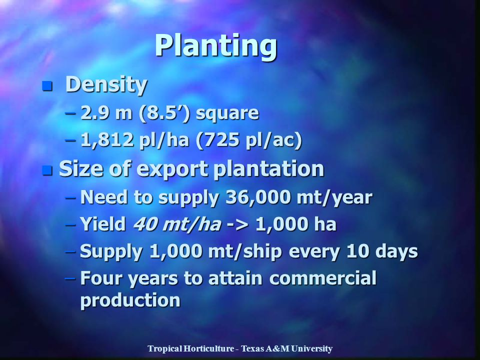 Tropical Horticulture - Texas A&M University Planting n Density –2.9 m (8.5') square –1,812 pl/ha (725 pl/ac) n Size of export plantation –Need to sup