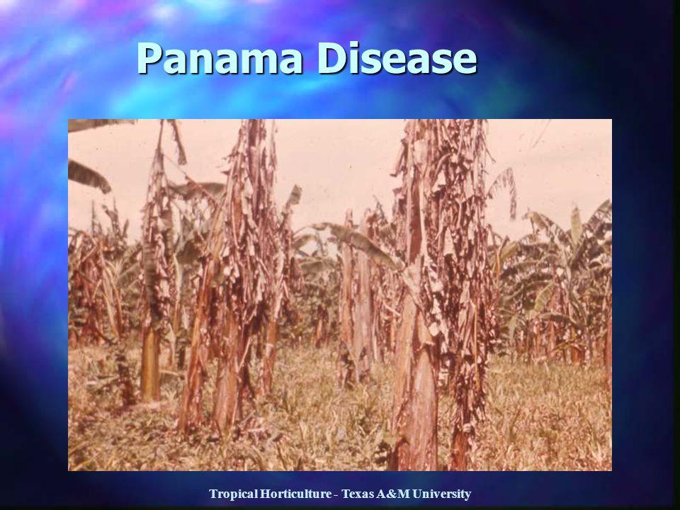 Tropical Horticulture - Texas A&M University Panama Disease