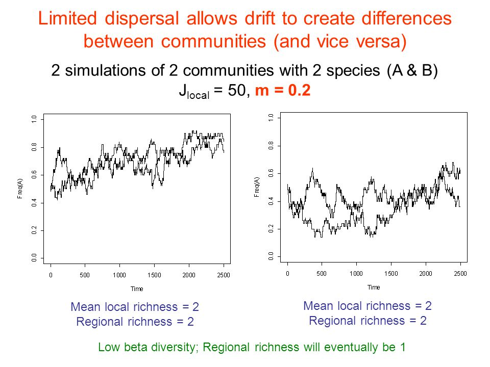 Limited dispersal allows drift to create differences between communities (and vice versa) 2 simulations of 2 communities with 2 species (A & B) J local = 50, m = 0.2 Mean local richness = 2 Regional richness = 2 Mean local richness = 2 Regional richness = 2 Low beta diversity; Regional richness will eventually be 1