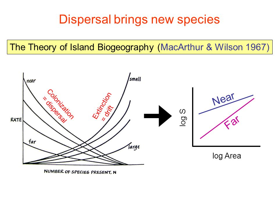 Dispersal allows populations to occur/persist in unsuitable habitat, elevating local diversity + - Fitness dif (A-B) + - A winsB wins no dispersal Freq(A) 0 1 0 1