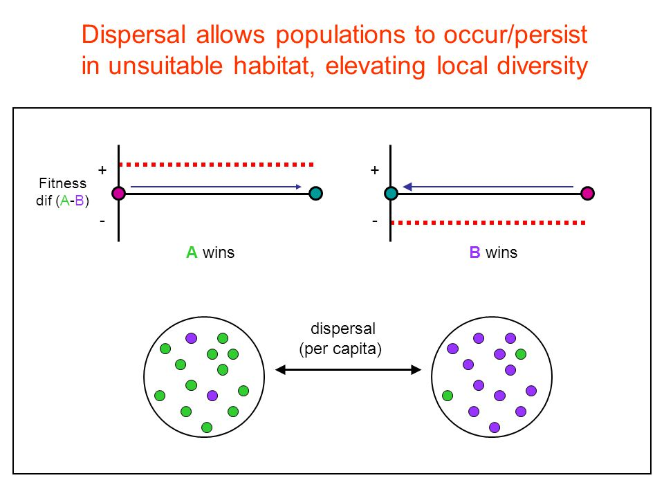 Dispersal interacts with selection: Can allow an inferior competitor to overcome a selective disadvantage + - Fitness dif (A-B) + - A winsB wins dispersal (per capita)