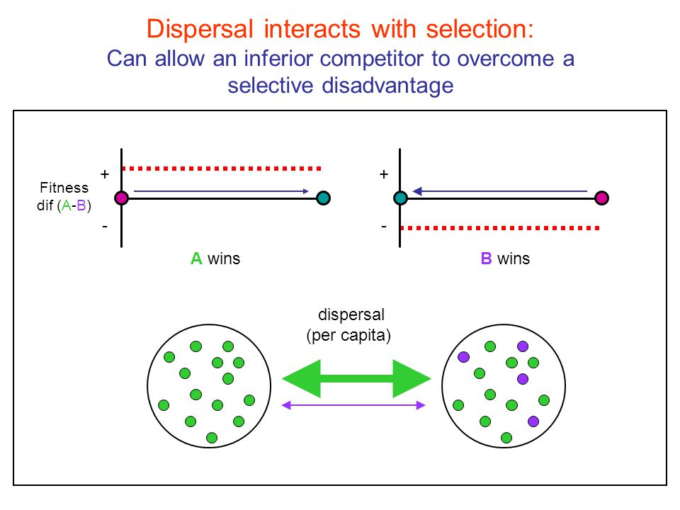 Is the effect of dispersal on communities stochastic.