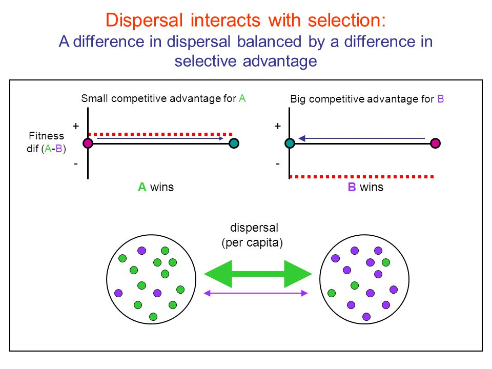 Dispersal interacts with selection: A local advantage can translate into regional dominance + - Fitness dif (A-B) + - A winsB wins Big competitive advantage for A Small competitive advantage for B dispersal (per capita)