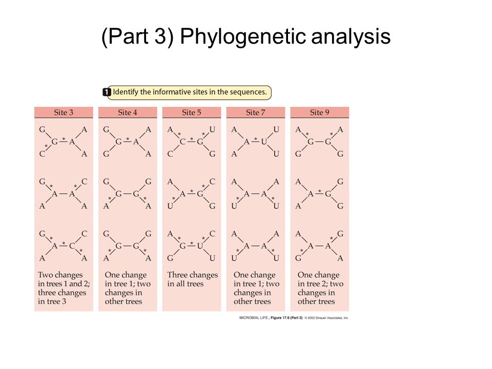 (Part 3) Phylogenetic analysis