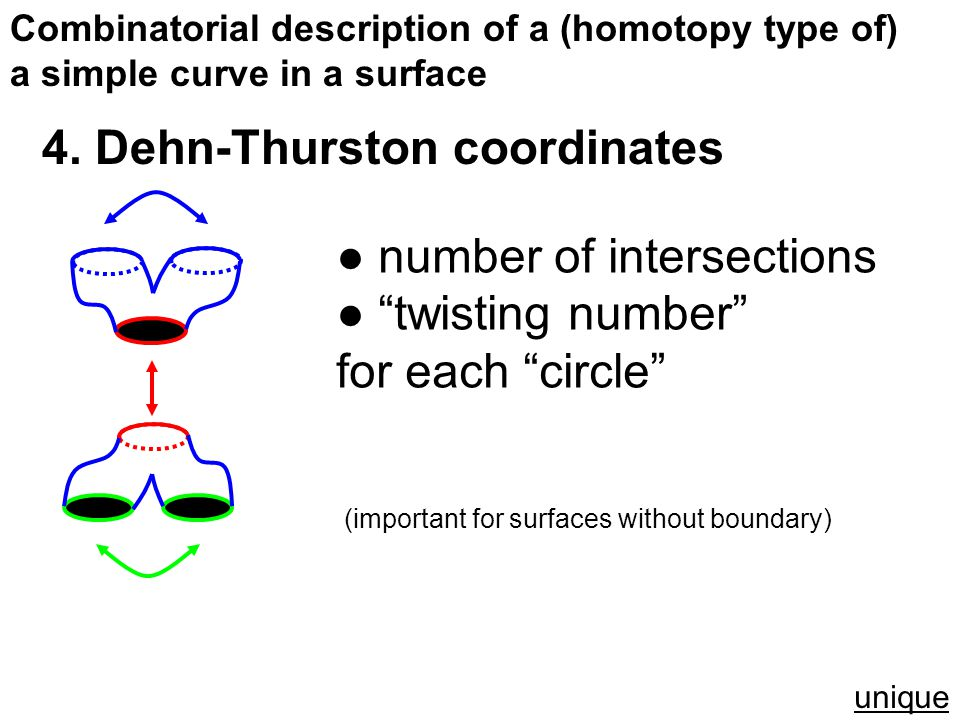 """Combinatorial description of a (homotopy type of) a simple curve in a surface 4. Dehn-Thurston coordinates ● number of intersections ● """"twisting numbe"""