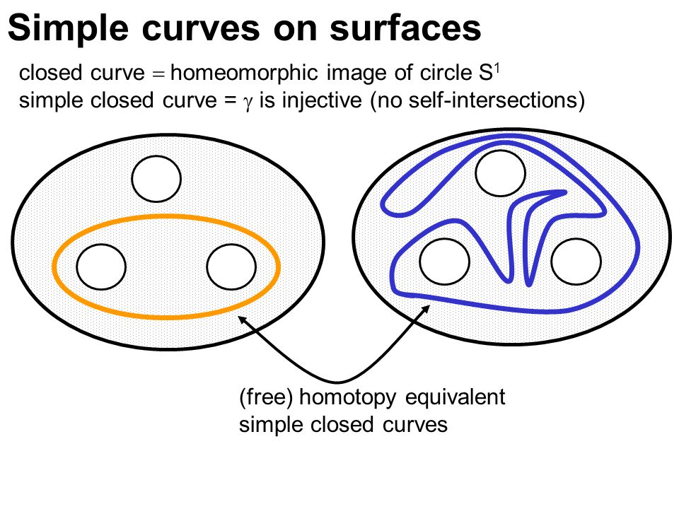 Simple curves on surfaces closed curve  homeomorphic image of circle S 1 simple closed curve =  is injective (no self-intersections) (free) homotopy equivalent simple closed curves