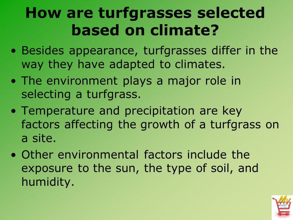 How are turfgrasses selected based on climate? Besides appearance, turfgrasses differ in the way they have adapted to climates. The environment plays
