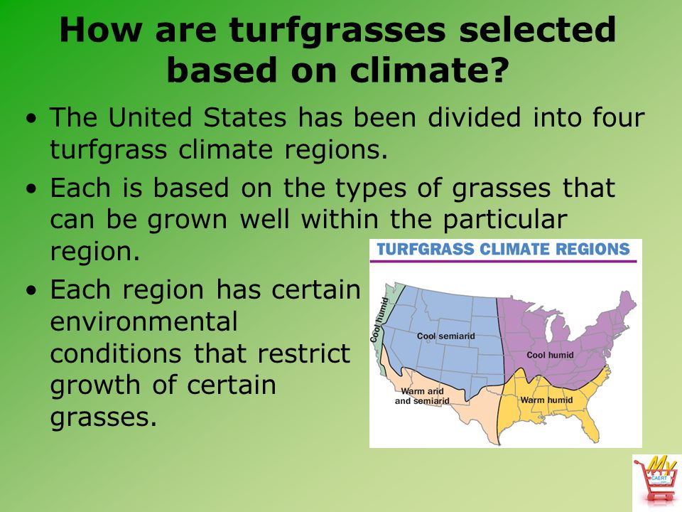 How are turfgrasses selected based on climate? The United States has been divided into four turfgrass climate regions. Each is based on the types of g
