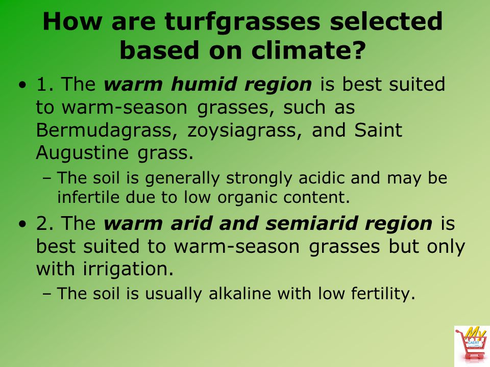 How are turfgrasses selected based on climate? 1. The warm humid region is best suited to warm-season grasses, such as Bermudagrass, zoysiagrass, and