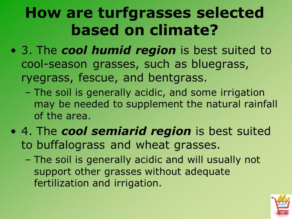 How are turfgrasses selected based on climate? 3. The cool humid region is best suited to cool-season grasses, such as bluegrass, ryegrass, fescue, an