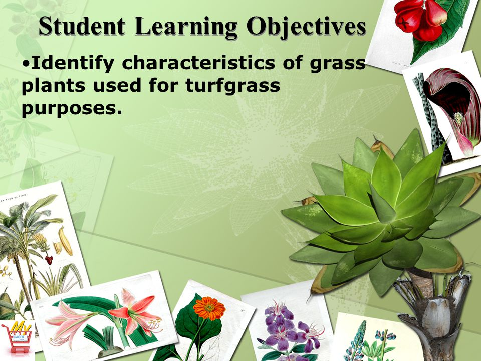 What are the major parts of turfgrass plants.2.
