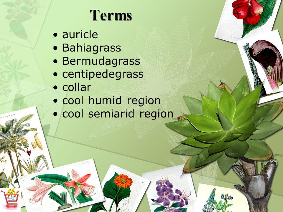 Terms auricle Bahiagrass Bermudagrass centipedegrass collar cool humid region cool semiarid region