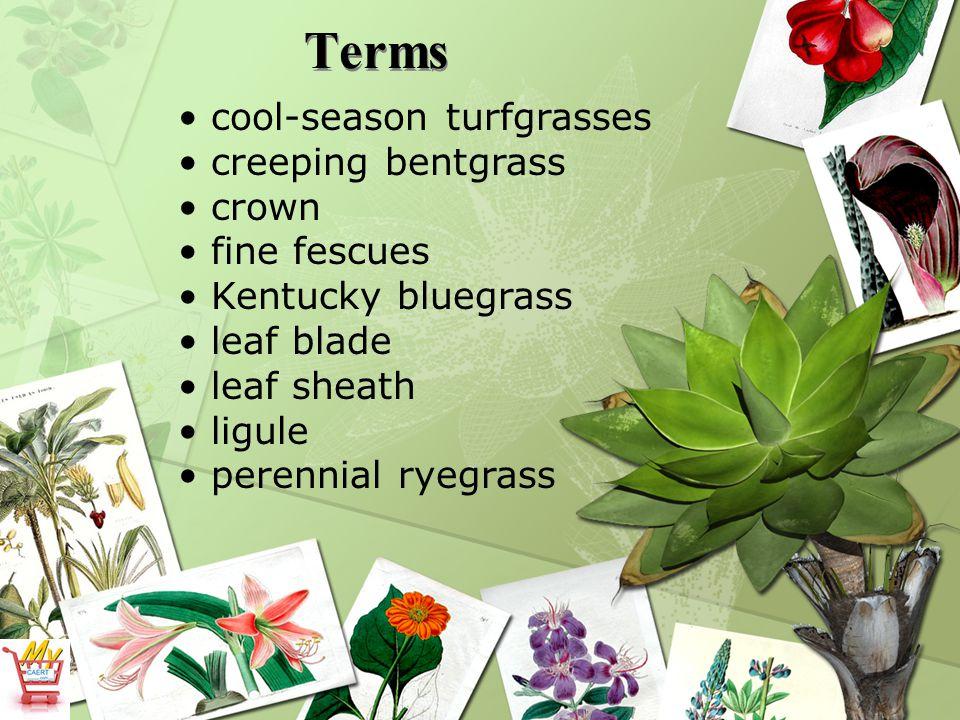 Terms cool-season turfgrasses creeping bentgrass crown fine fescues Kentucky bluegrass leaf blade leaf sheath ligule perennial ryegrass