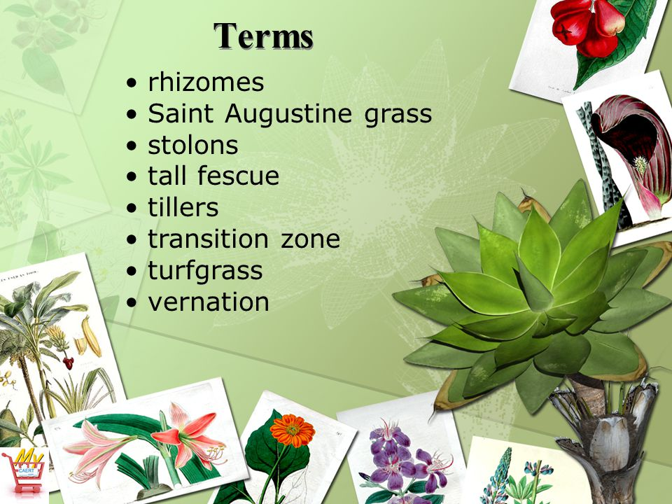What are the major parts of turfgrass plants.6.