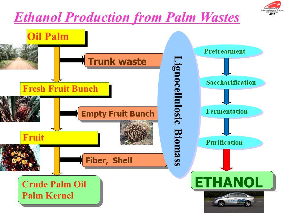 Ethanol Production from Palm Wastes Trunk waste Empty Fruit Bunch Oil Palm Fresh Fruit Bunch Fruit Fiber, Shell Saccharification Fermentation Purifica