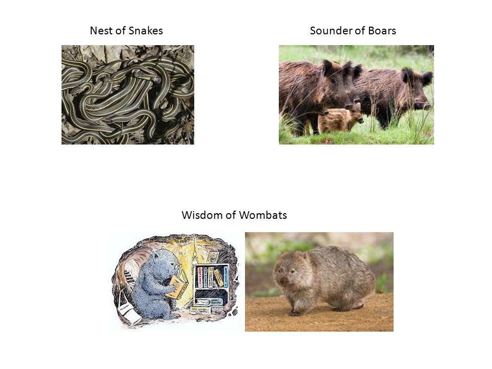 Sleuth of Bears Rabble of Rats Herd of Buffalo