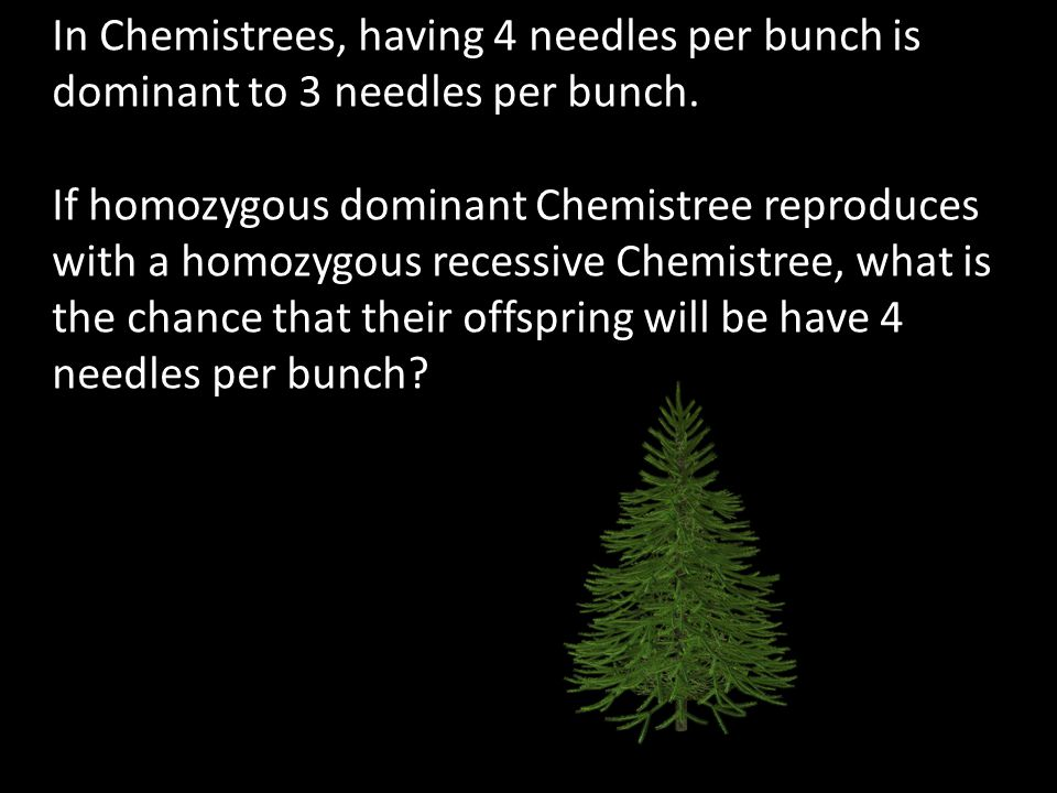 In Chemistrees, having 4 needles per bunch is dominant to 3 needles per bunch.