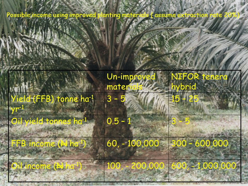E Un-improved materials NIFOR tenera hybrid Yield (FFB) tonne ha -1 yr -1 3 – 515 – 25 Oil yield tonnes ha -1 0.5 – 13 – 5 FFB income (N ha -1 )60, - 100,000300 – 600,000 Oil income (N ha -1 )100, - 200,000600, - 1,000,000 Possible income using improved planting materials ( assume extraction rate 20%)