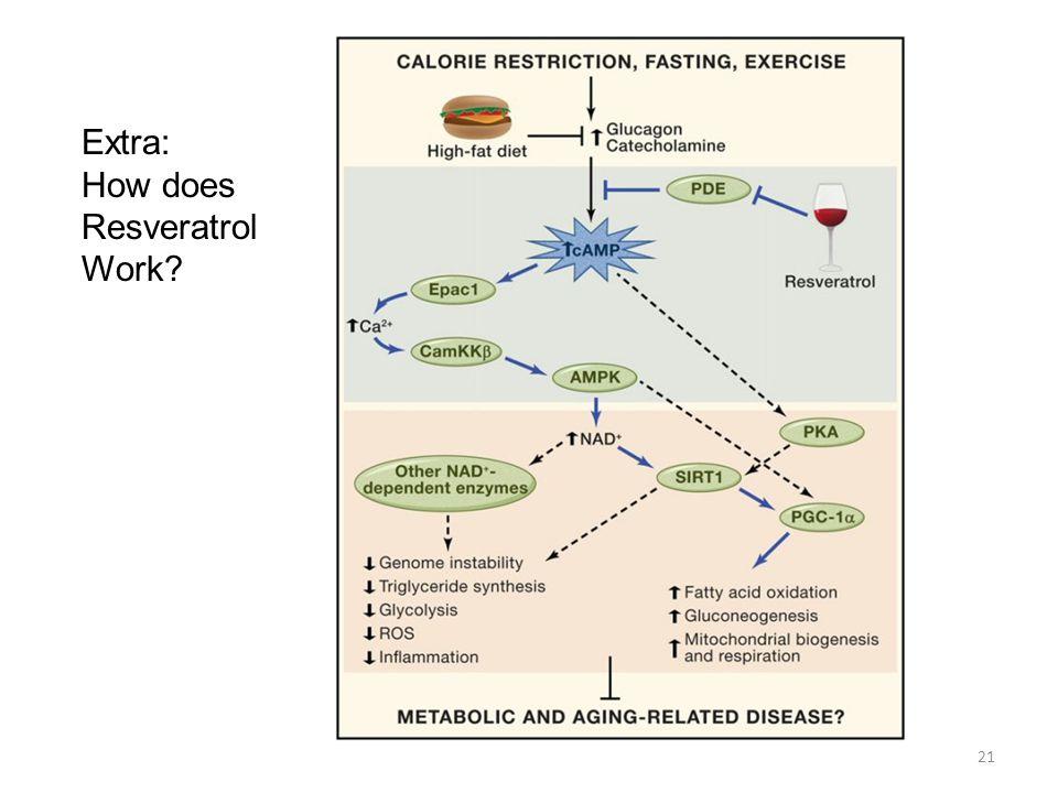 21 Extra: How does Resveratrol Work?