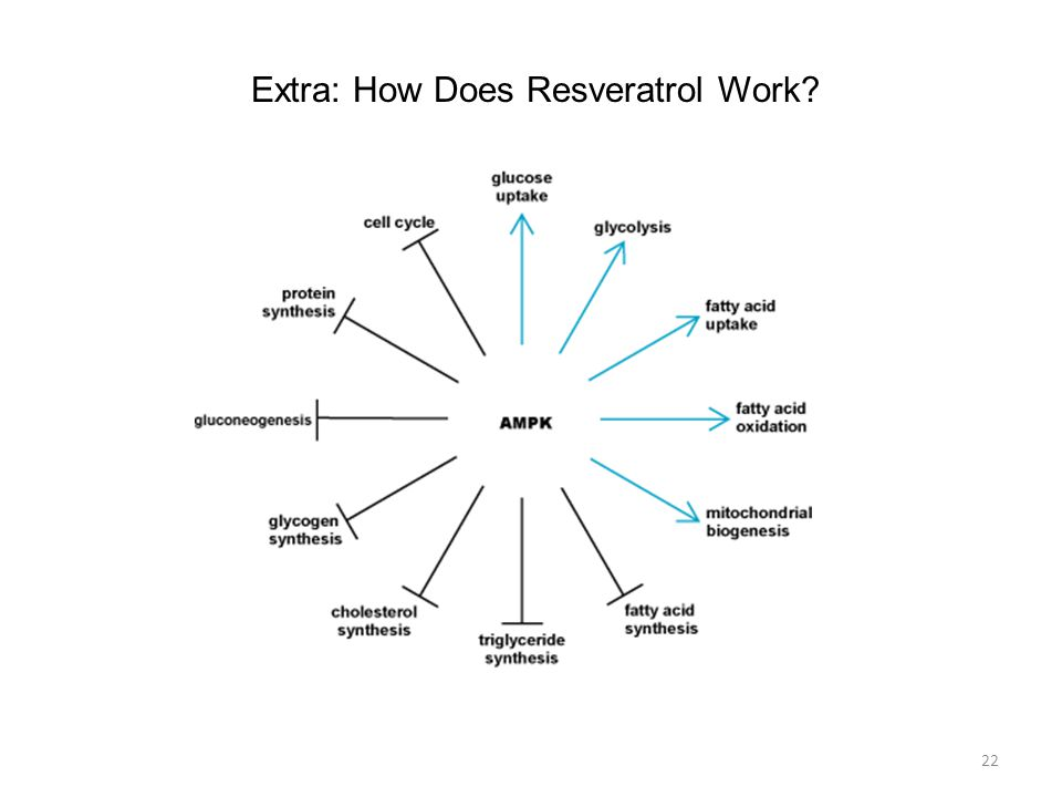 22 Extra: How Does Resveratrol Work?