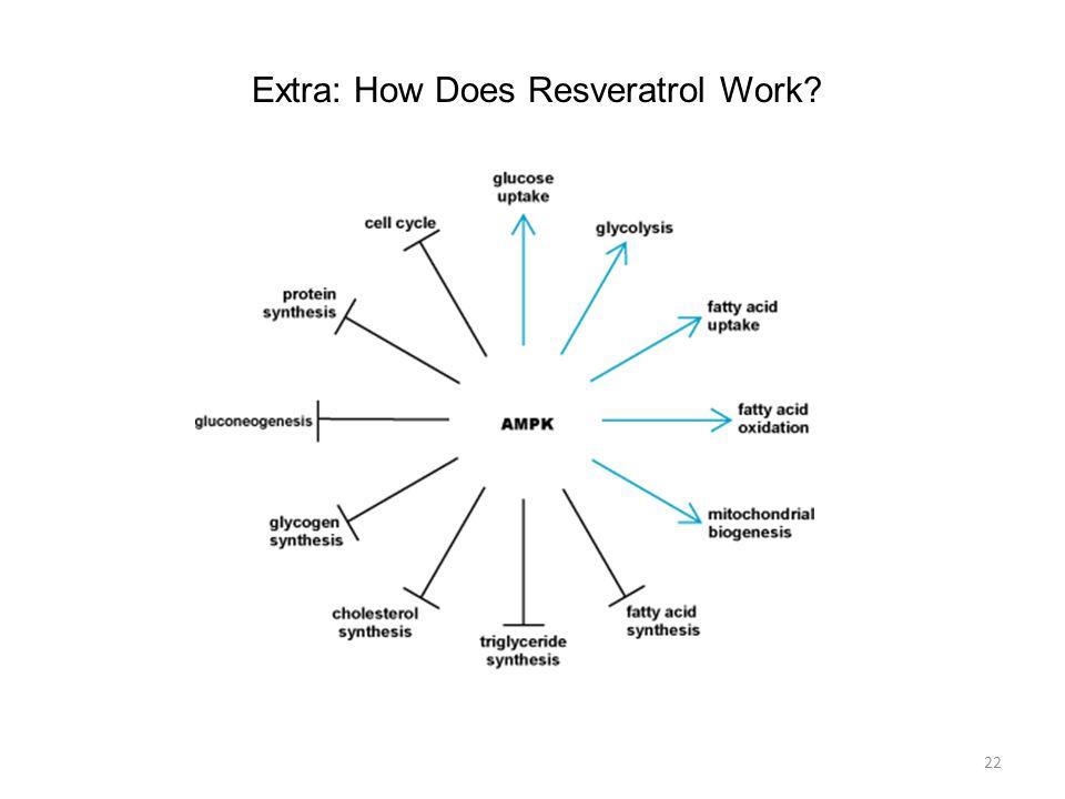 22 Extra: How Does Resveratrol Work