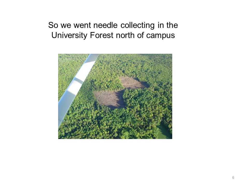 6 So we went needle collecting in the University Forest north of campus