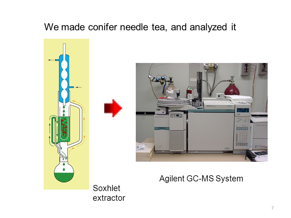 We made conifer needle tea, and analyzed it Soxhlet extractor Agilent GC-MS System 7