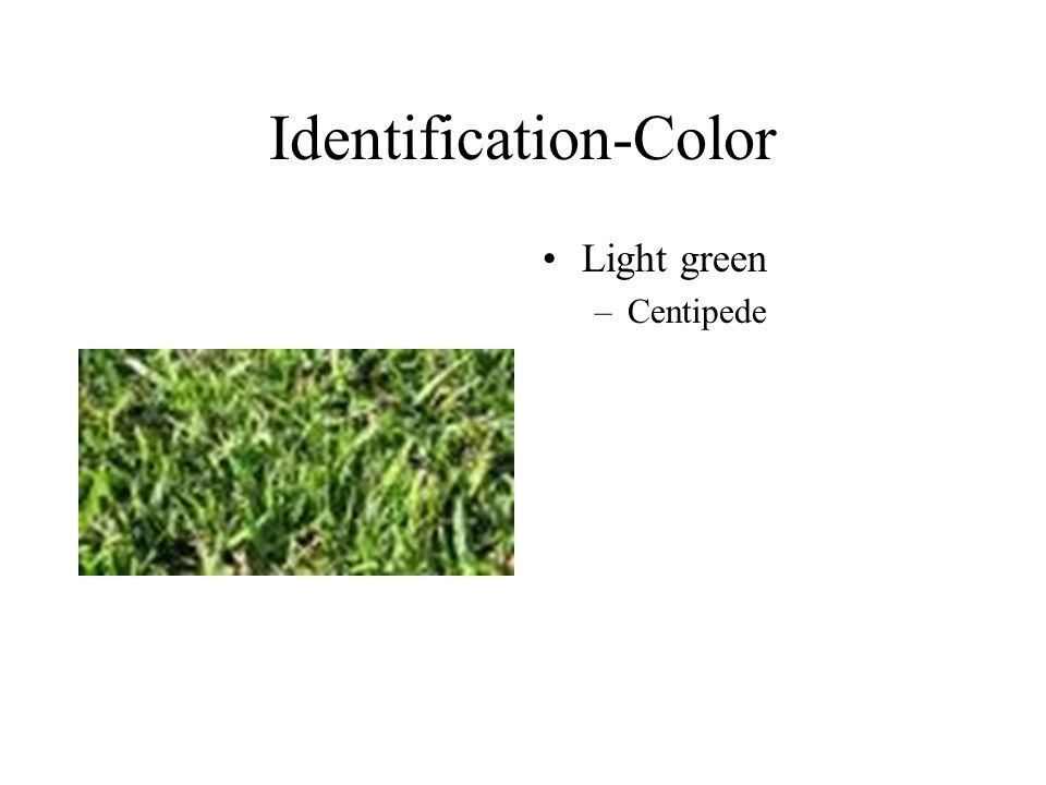 Identification-Color Light green –Centipede