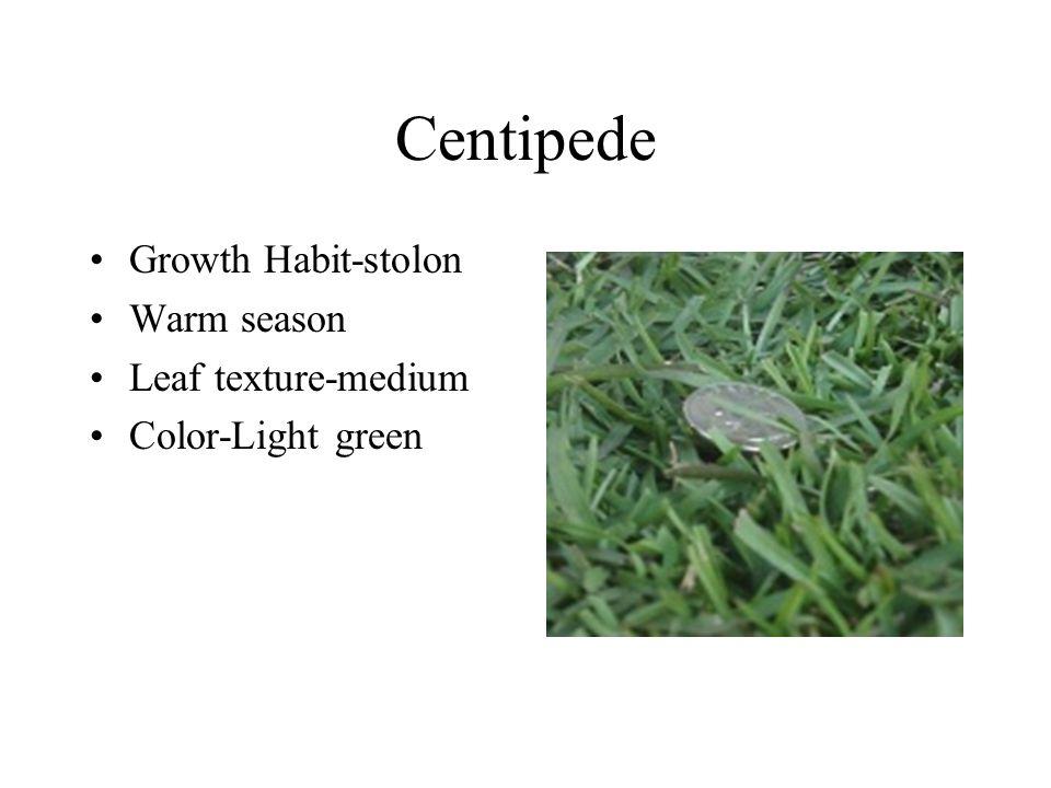 Centipede Growth Habit-stolon Warm season Leaf texture-medium Color-Light green