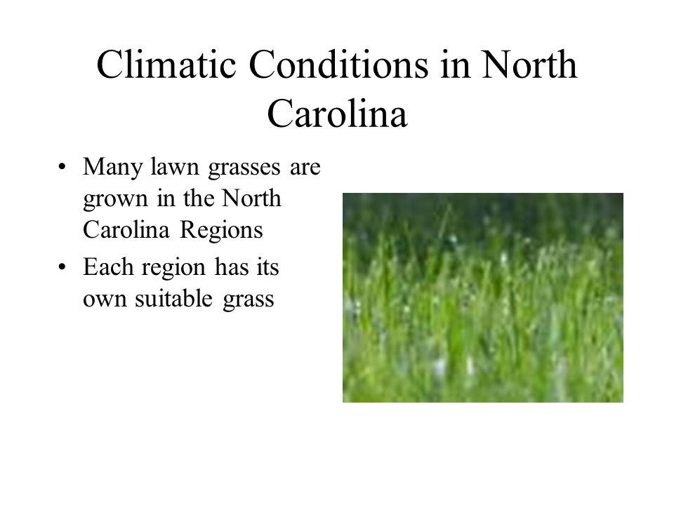 Identification-Color Medium green to dark green –KY, Bahia, St. Augustine grass, Zoysia